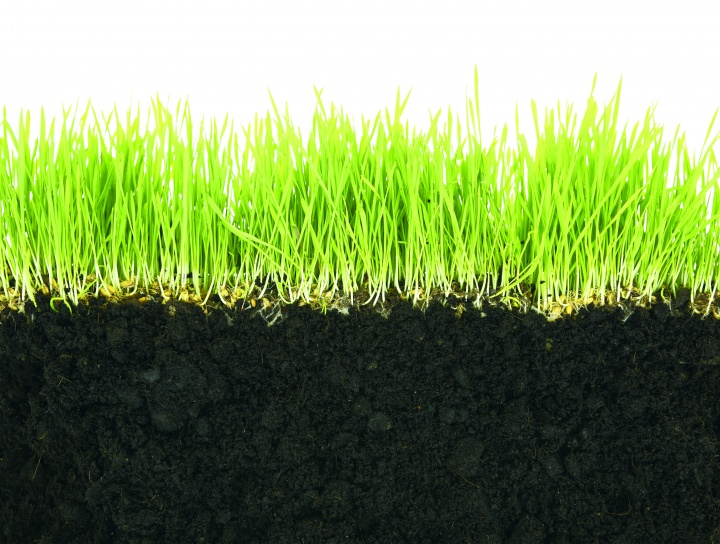 Cut view of grass and dirt.