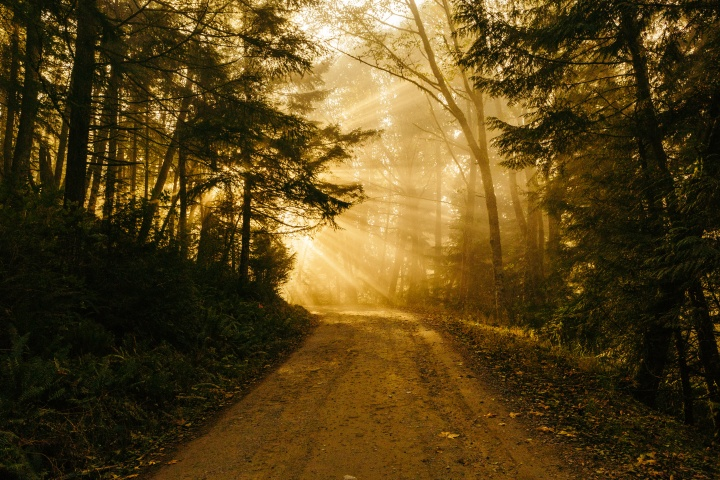 Sun rays coming through the trees where a gravel path is located.