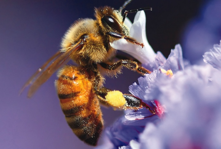 A bee on a flower stem.