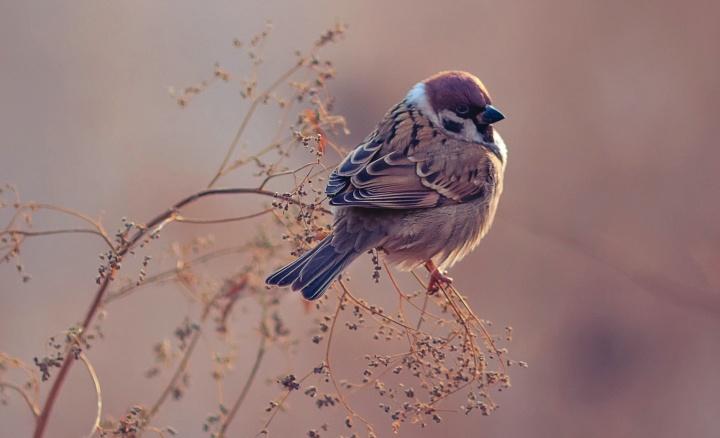 A small bird sitting on a twig of bush.