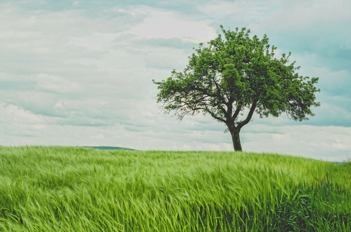 Photo of a Tree in a Field