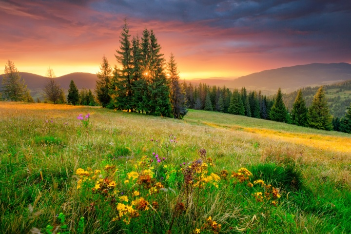 A beautiful field of flowers, trees and sun.