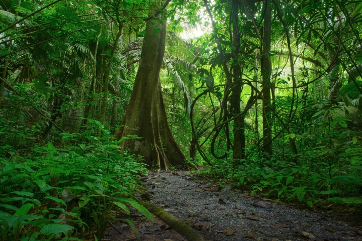 A path leading into a dense jungle of vegetation.