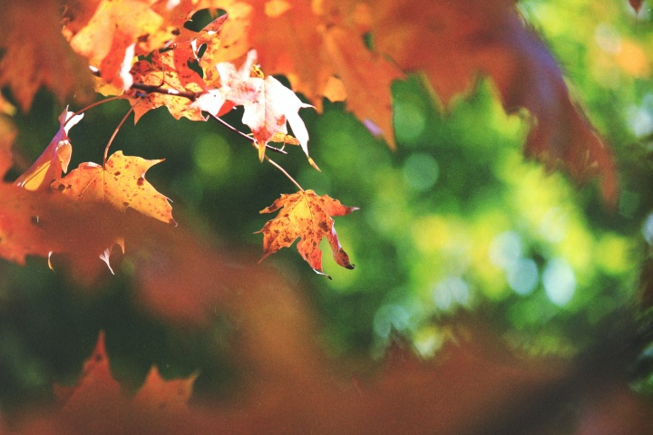 Photo of fall leaves.