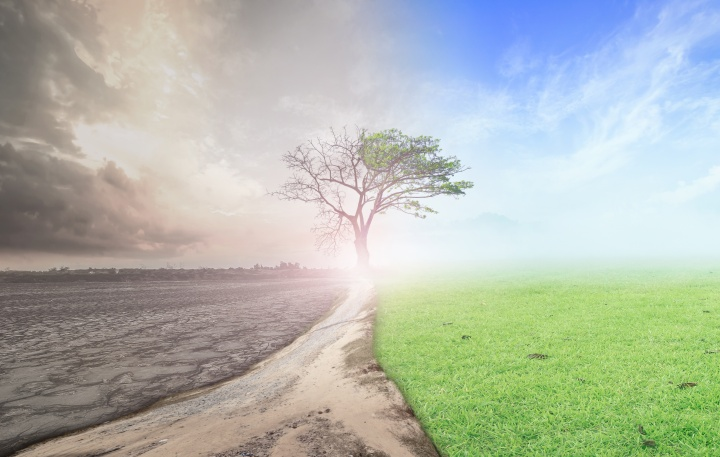 An photo illustration of dry desolate ground becoming green and dead tree growing leaves.