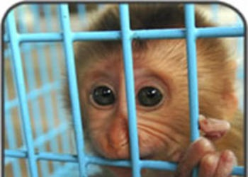 Did God Give Animals Rights?