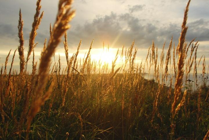 Sunrays coming through tall grass.