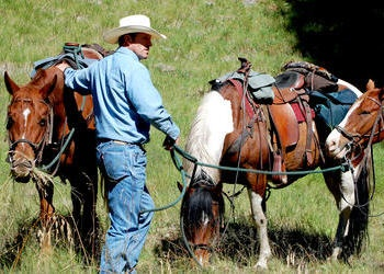 cowboy with horses
