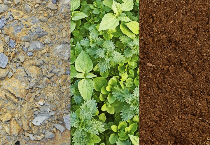 Different soil types.