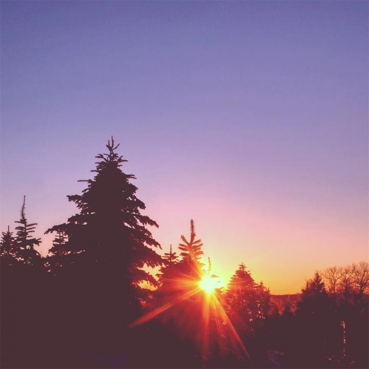Sunset through trees.