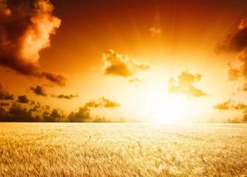 Sunrise of a field of grain.