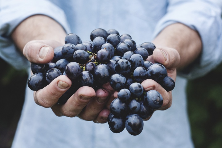 A man holding a large cluster of grapes.