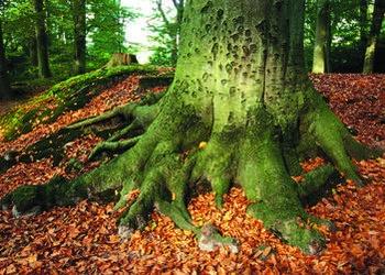 The Slow Tree