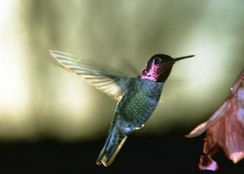 Living in Hummingbird Mode?