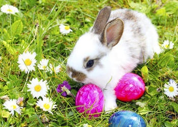 Bunny rabbit in the grass with colored Easter eggs.