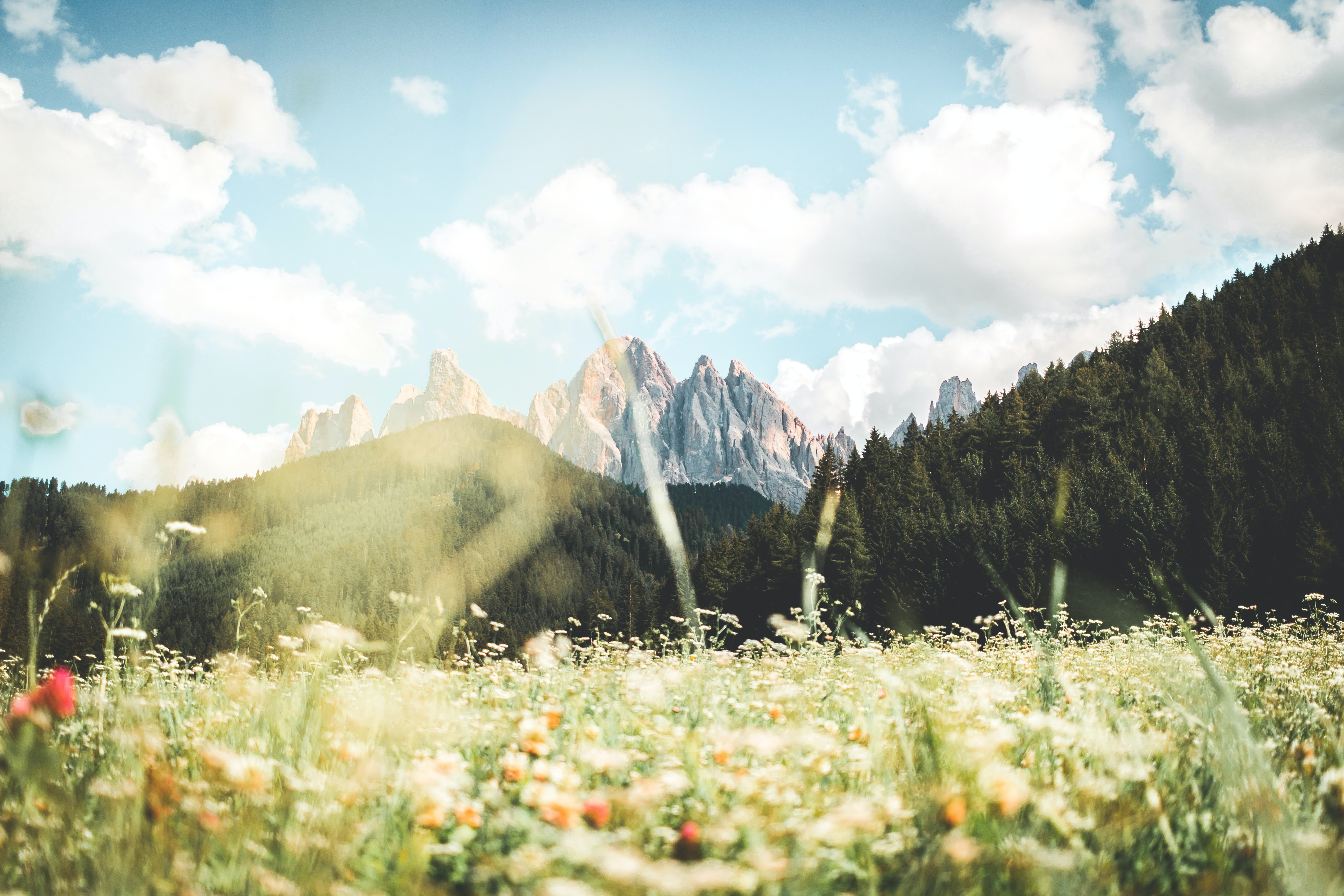 Photo of meadow with mountains in background.
