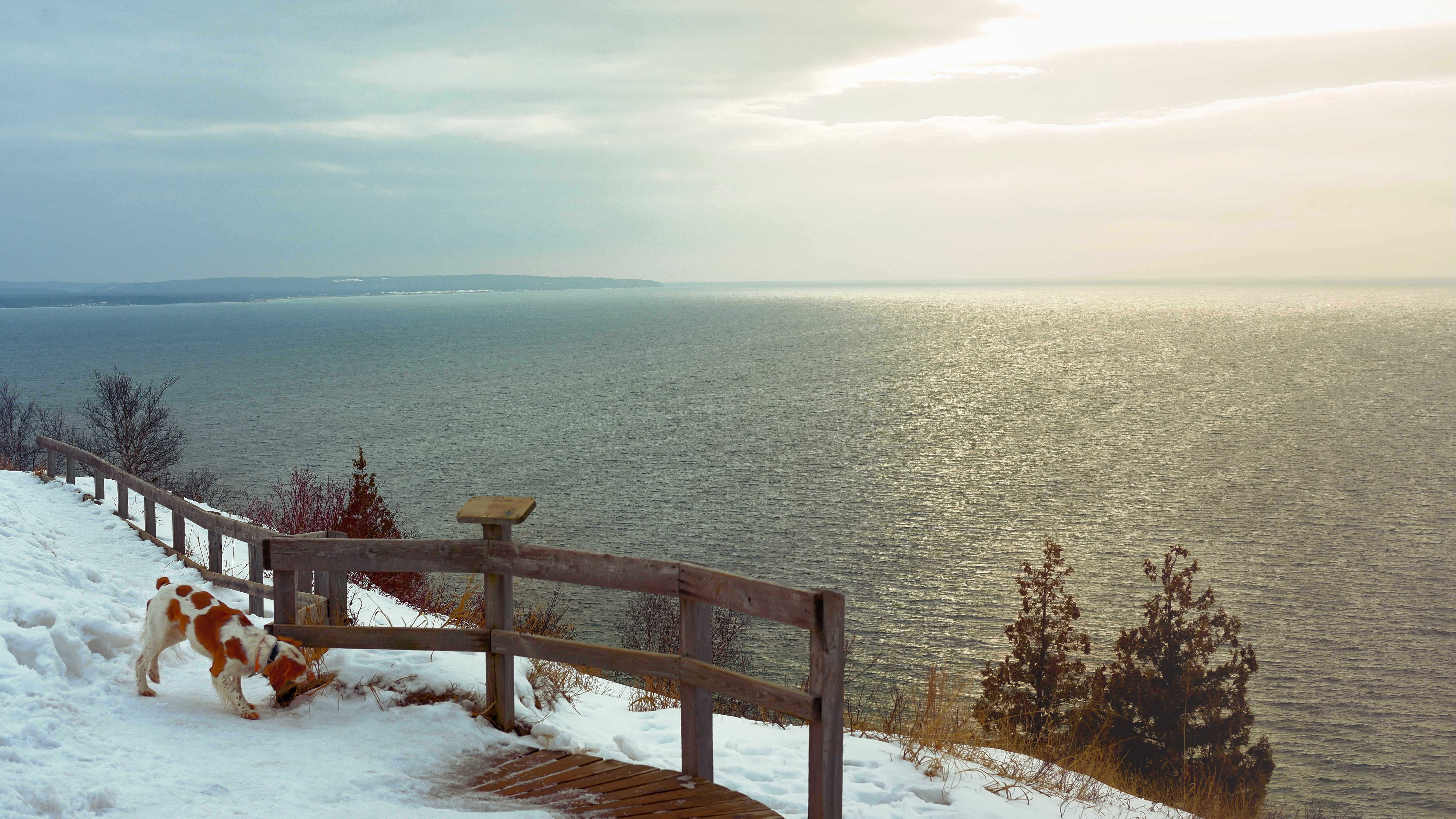 Photo of a reddish brown and white dog on a snowy cliff path sniffing an old wooden fence, with the ocean in the background.