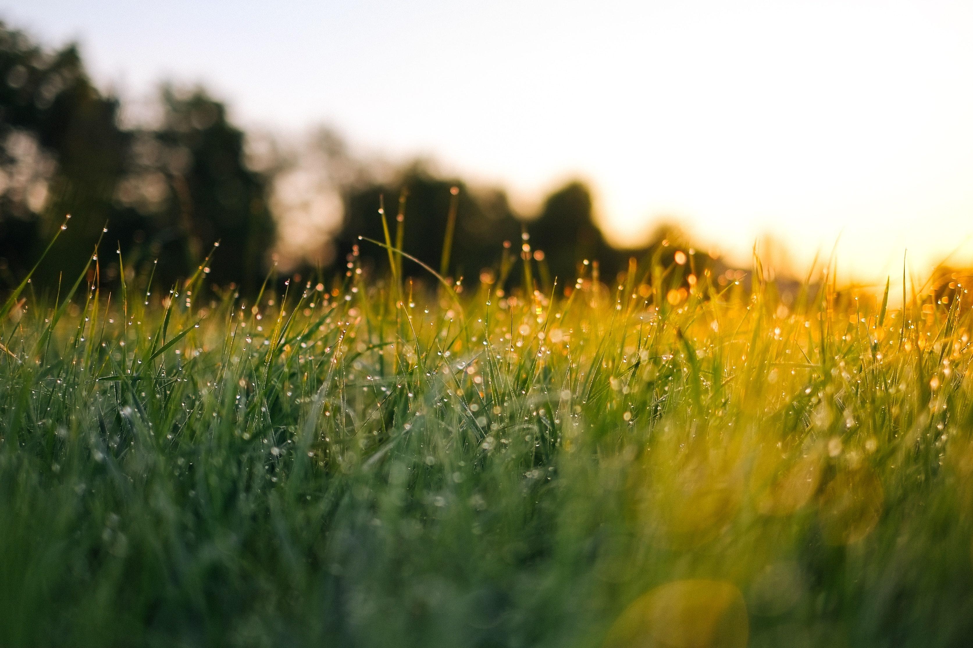 Field of grass during golden hour.