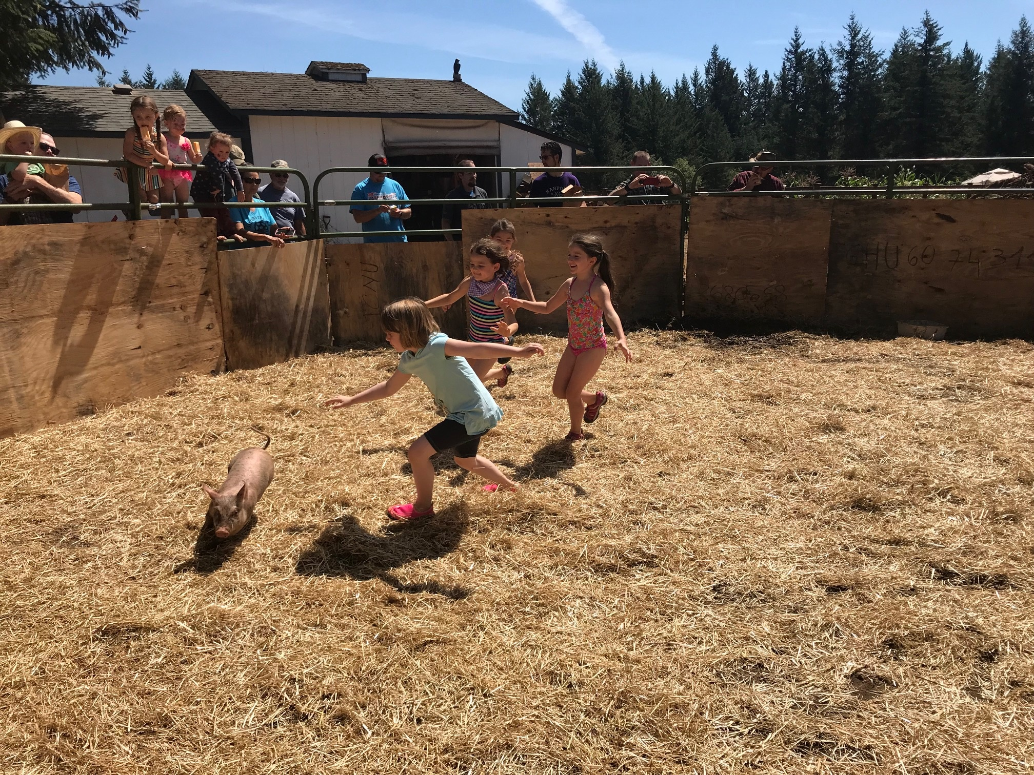 Children chasing small pigs for a fun afternoon activity.