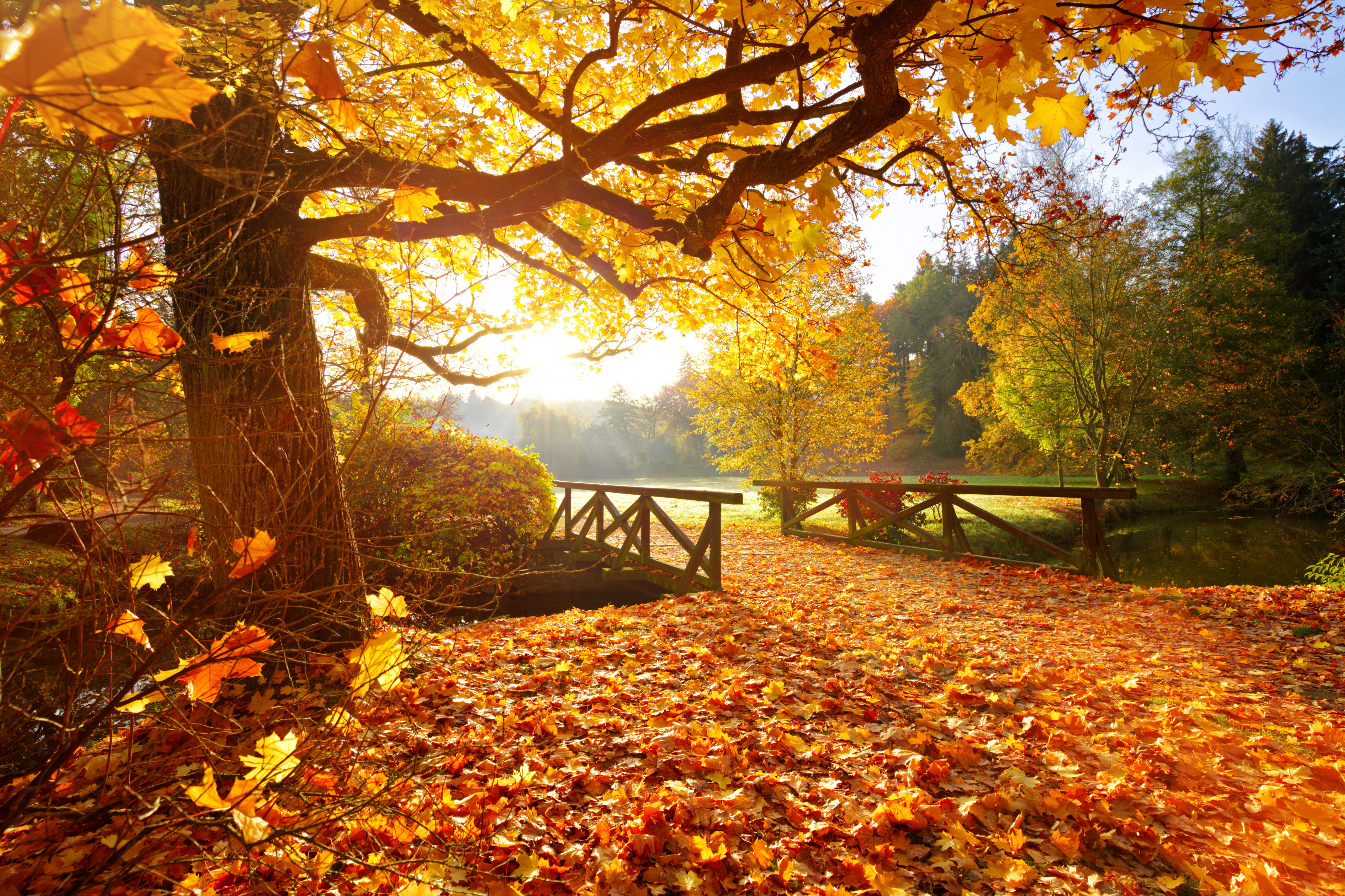 Photo of a bridge in the forest at golden hour. Light shines through the autumn foliage.