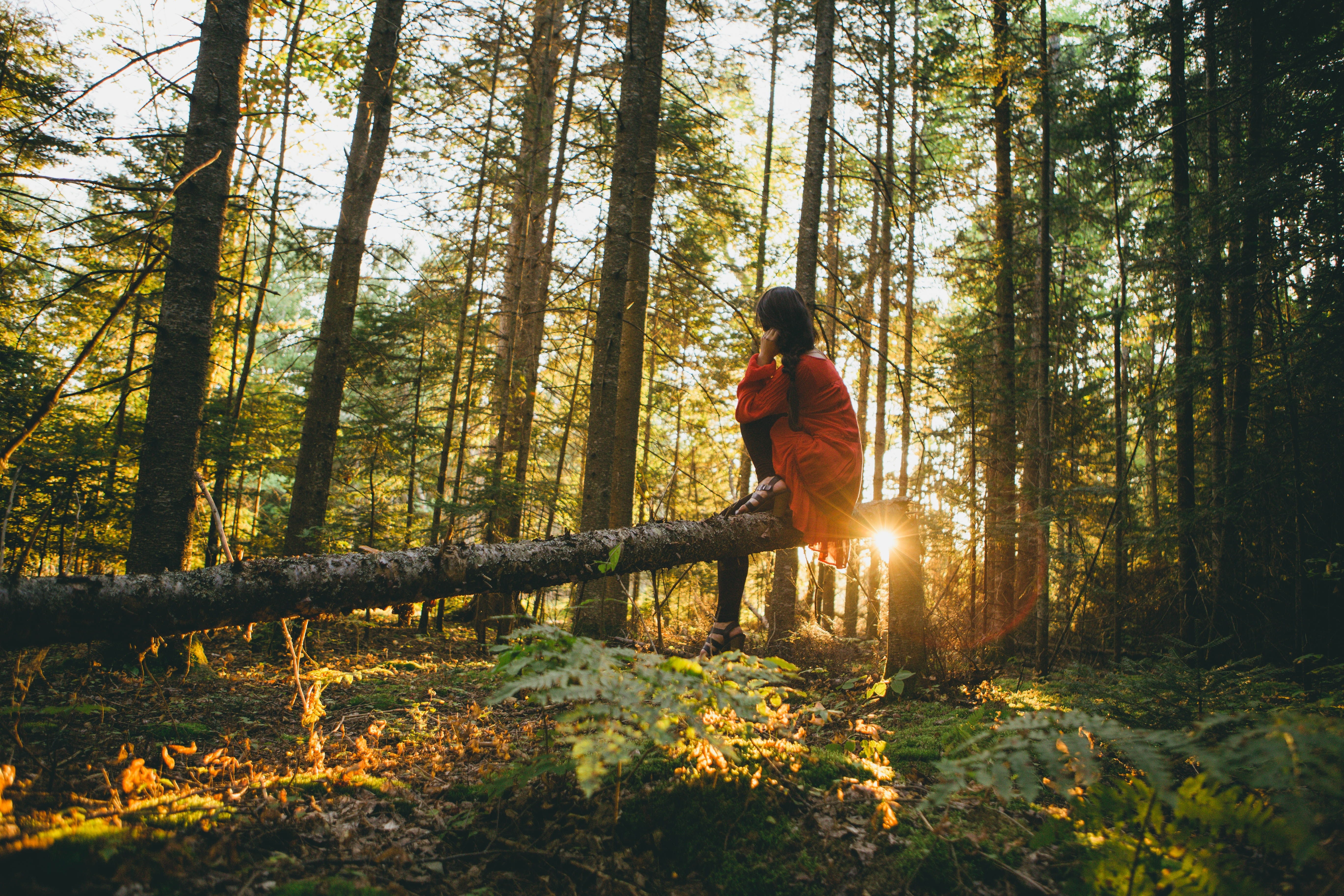 Photo of girl sitting on a fallen tree in the forest as the sun shines through the trees.