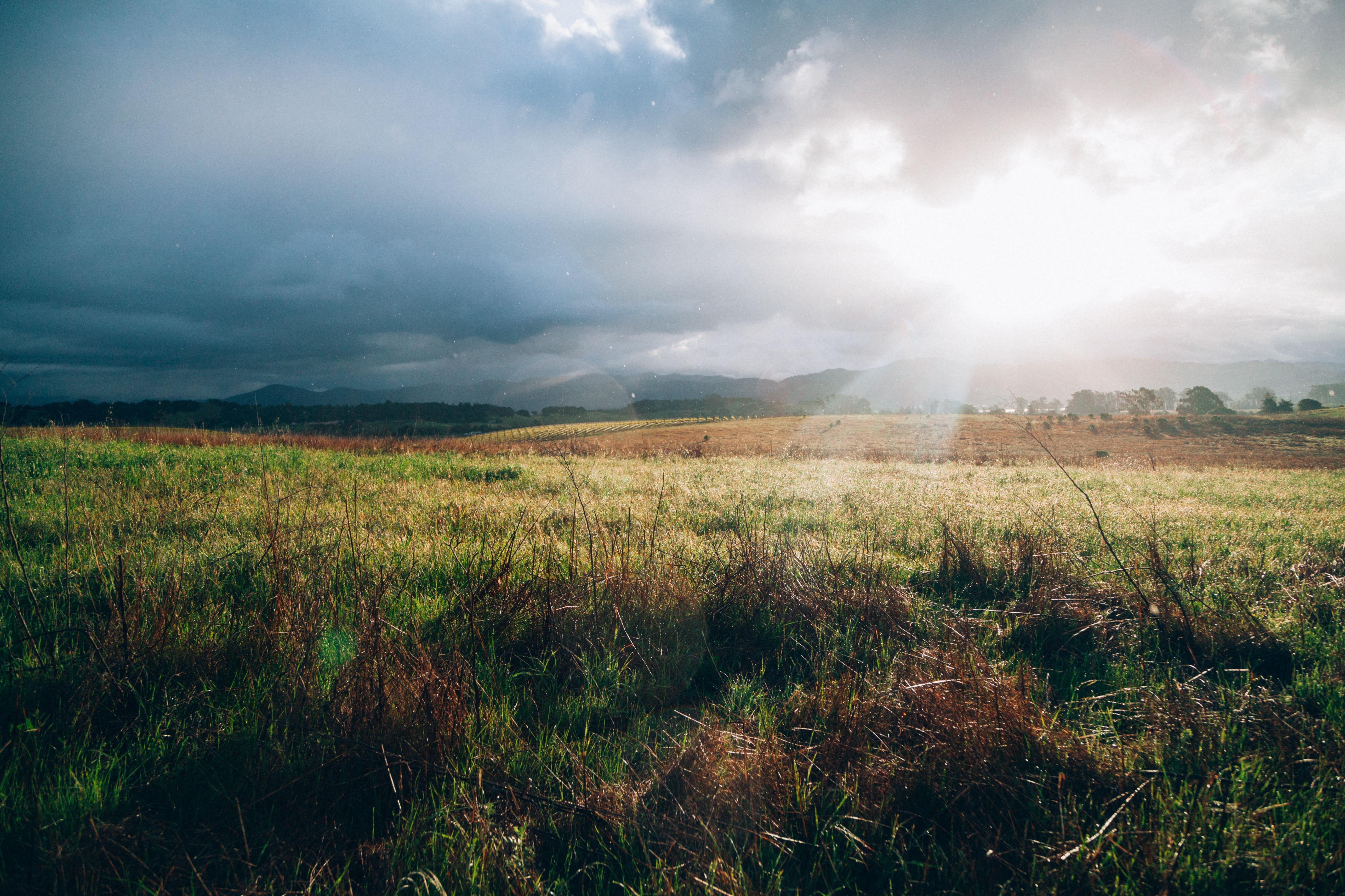 Sunrays on a field.