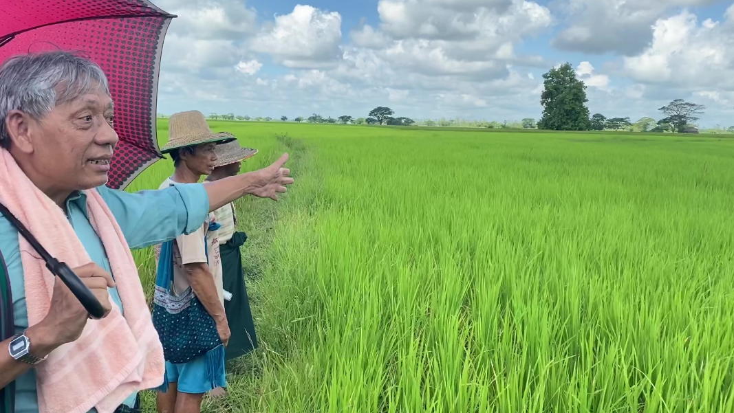 David Lay Beh showing the 6.5 acre rice field.