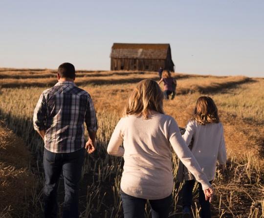 A family walking in a wheat field towards an old barn.