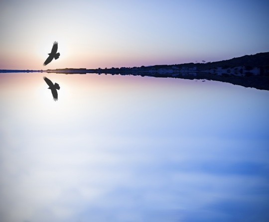 A eagle flying over water.